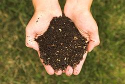 composting hands